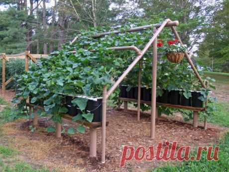 Идея для выращивания огурцов