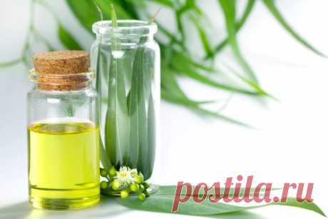 ༺🌸༻ Целебное масло эвкалипта: 10 незаменимых свойств и способы применения