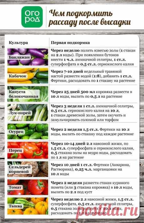 Pinterest (Пин) (437)
