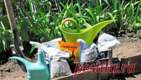 Когда плоды на кустах только начинают наливаться, я поливаю растения волшебным биококтейлем (урожай всегда радует - перцы и помидоры точно вырастают вдвое крупнее, чем обычно )