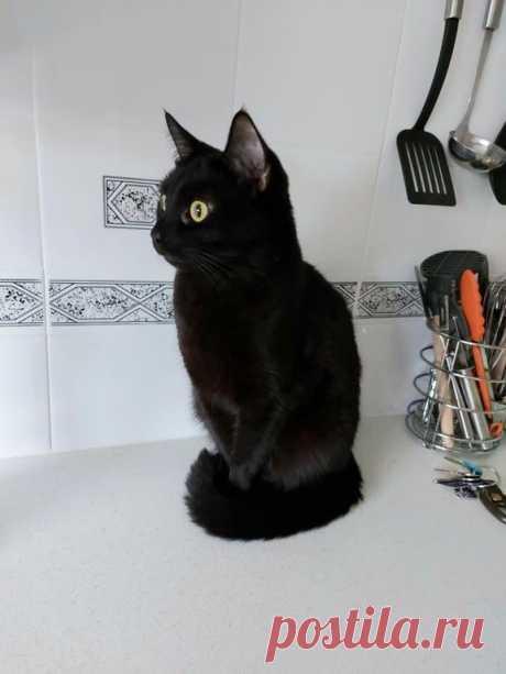 Зря ругают черных кошек, ох и зря