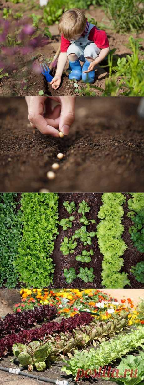 Распространенные ошибки при посеве овощей.
