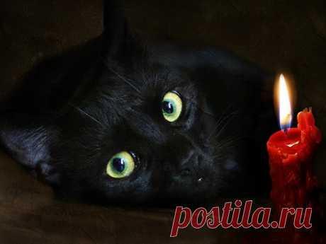 Почему нельзя смотреть в глаза кошке Скошками издавна связано очень много суеверий. Например, многие слышали, что коту нельзя заглядывать вглаза. Узнайте, откуда появилось это поверье, истоитли его придерживаться.