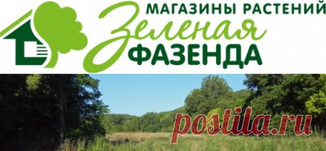 Саженцы в Спб Вопрос-ответ | Питомник Зеленая Фазенда