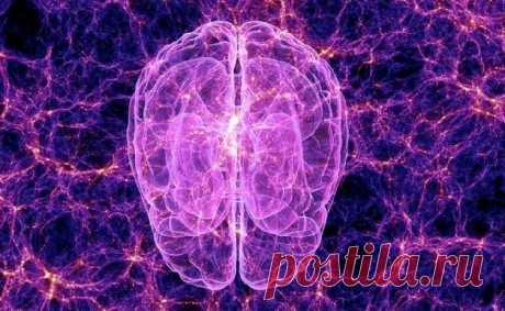 Что такое мозг, где живет сознание и что такое душа?   Наука и технологии