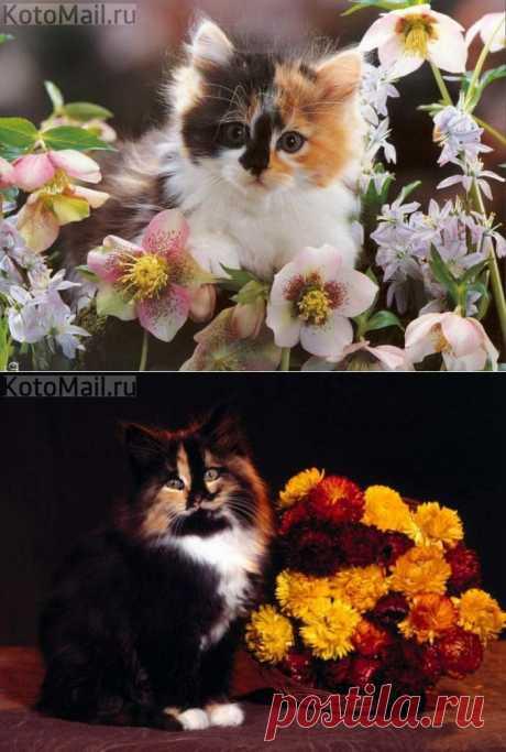 Многоцветие!