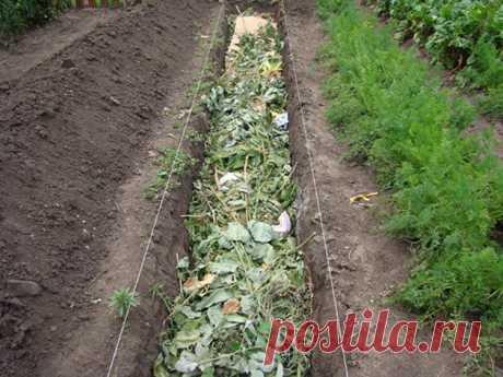 Как вырастить хороший урожай огурцов — полезные советы