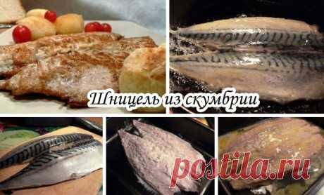 Шницель из скумбрии  Недорогое, простое в приготовлении блюдо.  Вам потребуется:  Скумбрия - 2 шт Яйцо - 1 шт Соль по вкусу Сметана - 2 ст.л Масло растительное - 2 ст.л Перец по вкусу