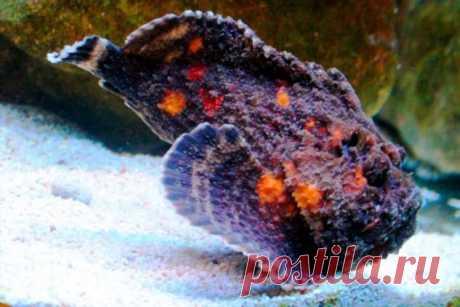 7 опасных рыб, которые способны убить человека . Тут забавно !!!