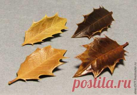 Замачиваем листья в глицерине