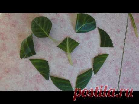Глоксиния. Размножение листом и его фрагментами.
