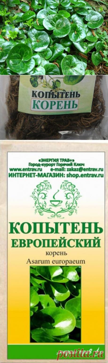 Лечение алкоголизма с помощью корня травы копытень европейский: рецепты приготовления, противопоказания — Бабушкины секреты
