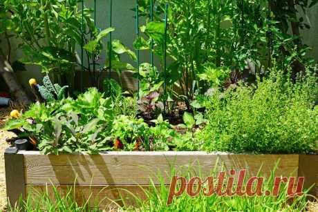 Овощное общежитие — мой опыт смешанных и конвейерных посадок. Фото — Ботаничка.ru