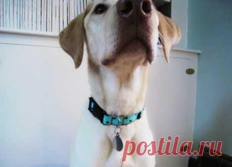 Ошейник для собаки своими руками: 3 пошаговый мастер-класса с фото
