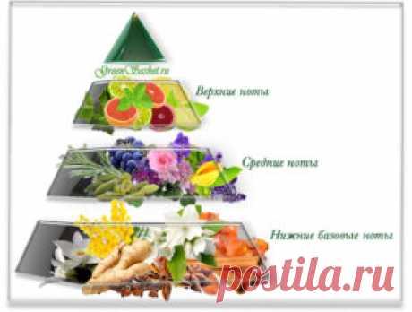 Духи своими руками. 5.Ольфакторная пирамида. — greensashet