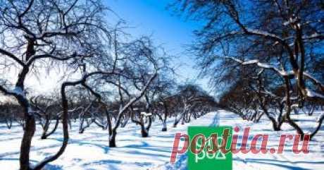 Зоны морозостойкости USDA – что это такое и как их использовать у нас Зоны морозостойкости – вертикально зонированные географические области по принципу среднего значения ежегодной минимальной температуры на основе многолетних статистических наблюдений. Именно они служат ограничивающим климатическим фактором для жизнедеятельности растений.