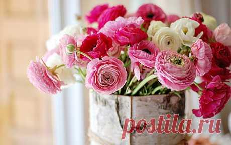 14 удивительно красивых растений, которые стоит посадить в саду   Цветники и клумбы (Огород.ru)