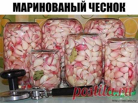 El ajo marinado el modo frío. ¡Oh, y vkusnyashka!