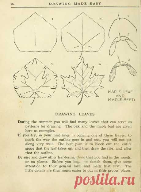 """(5) Today's Drawing Class 101: Featuring lessons from the 1921 vintage book """"Drawing made easy : a helpful book for young artists""""   Drawing maple leav…"""
