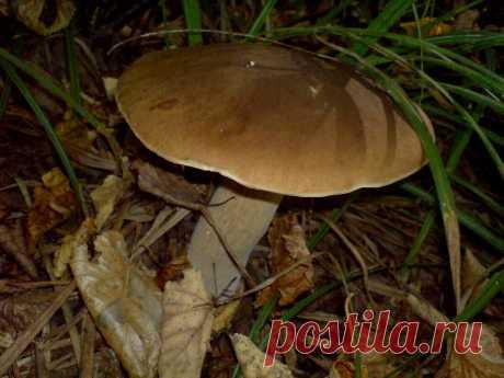 Как заготовить белые грибы на зиму, если их много, а сушка - невозможна? Быстро и просто. | грибной критик | Яндекс Дзен