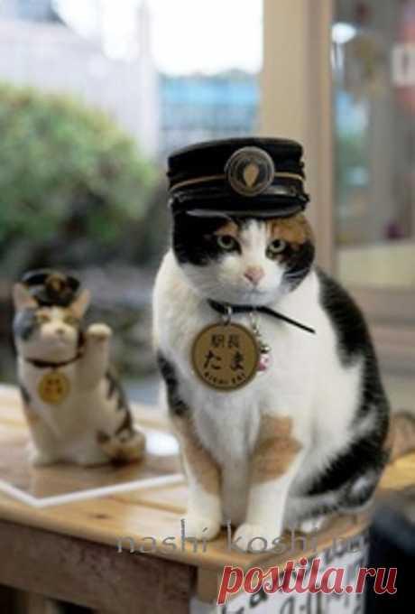 Изображение:Кошка Тама – станционный смотритель | Все о кошках Найдено в Google. Источник: nashi-koshi.ru.