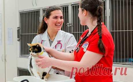 """Волонтерам і бездомним тваринам - Ветеринарний кардіологічний консультаційний центр"""""""