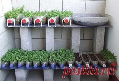 El modo simple y no trabajoso de cultivar las plantas