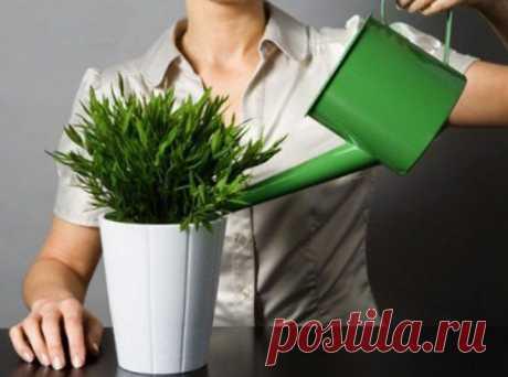 Чем подкармливать комнатные растения?.