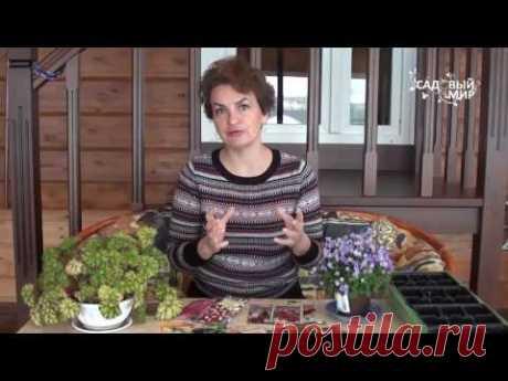 Что посеять в феврале  Часть 2  Какие овощи сеять в феврале
