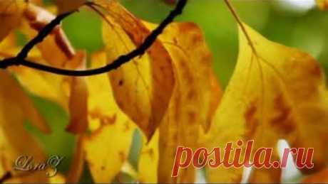 """Октябрь в моём сердце...( музыка - Р. Паулс, тема из к/ф """"Долгая дорога в дюнах"""")"""