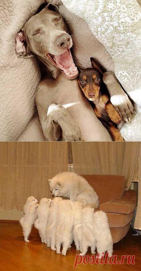 Собаки » Клопик.КоМ - сайт любителей животных