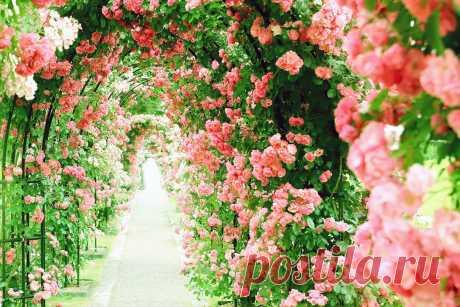 Вертикальное озеленение превратит участок в филиал рая - Building online Магия флоры завораживает, дает возможность отвлечься от повседневной суеты, позволяет прикоснуться к чистоте и совершенству, созданному самой природой. Здорово, что стать ближе к природе можно, даже не уезжая...