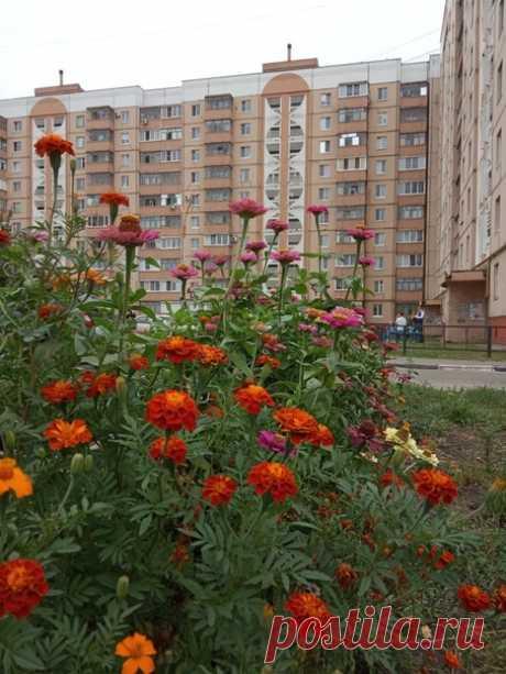 Городские цветы ♥