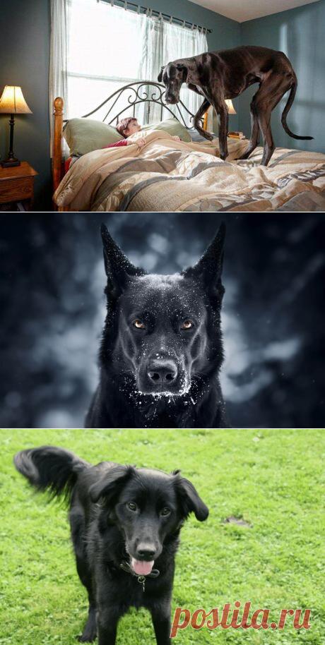 К чему снится Черная Собака — 30 значений сна для мужчин и женщин