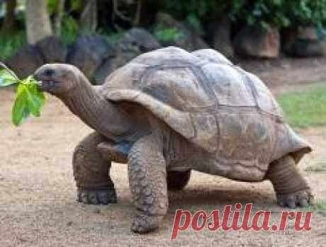 """Сегодня 23 мая отмечается """"Всемирный день черепахи"""""""