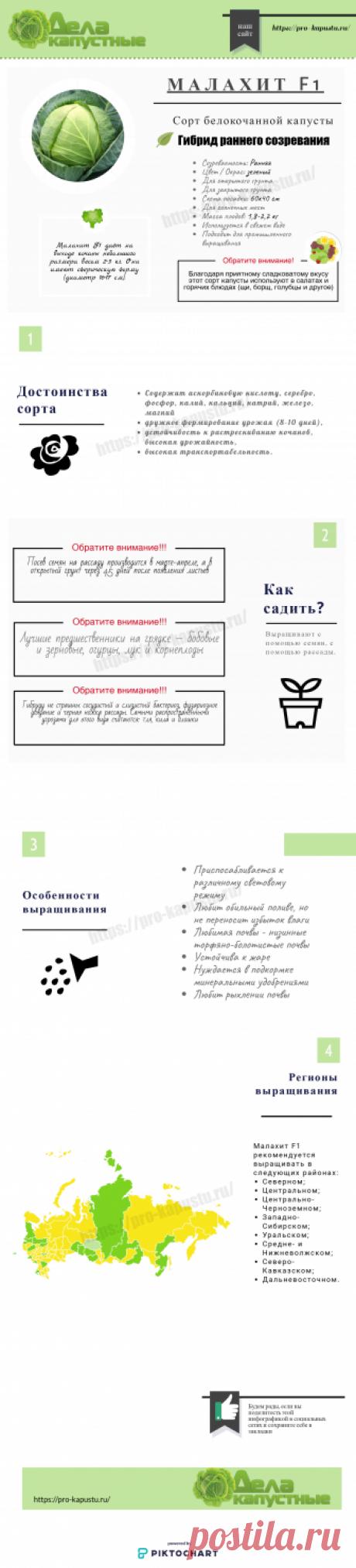 Капуста белокочанная Малахит F1 - описание сорта и применение