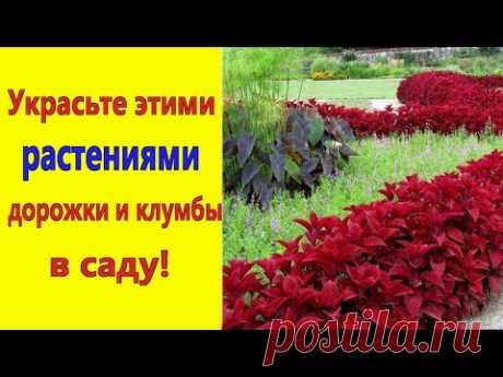САМЫЕ КРАСИВЫЕ БОРДЮРНЫЕ ЦВЕТЫ для УКРАШЕНИЯ цветников и дорожек в саду.