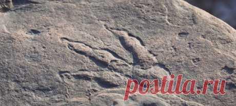 Иногда удивительные находки прячутся прямо под ногами. А так как у взрослых времени смотреть под ноги, очевидно, не слишком много, бремя сенсационных открытий ложится на плечи любопытных детей. Так, четырехлетняя Лили обнаружила отпечаток динозавра возрастом в целых 215 миллионов лет! Возможно, лучший из всех найденных за последние десять лет в Великобритании.