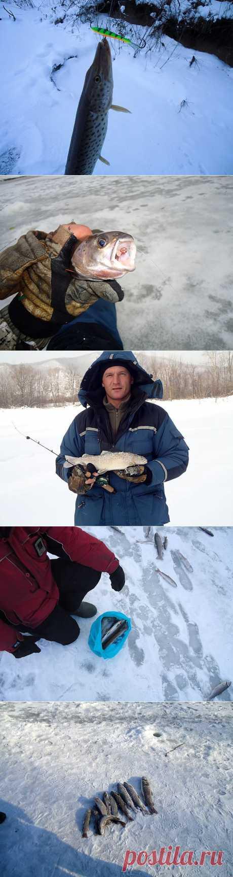 Зимний ленок, хариус и щука | Блог Отшельника | Природа Приморского края