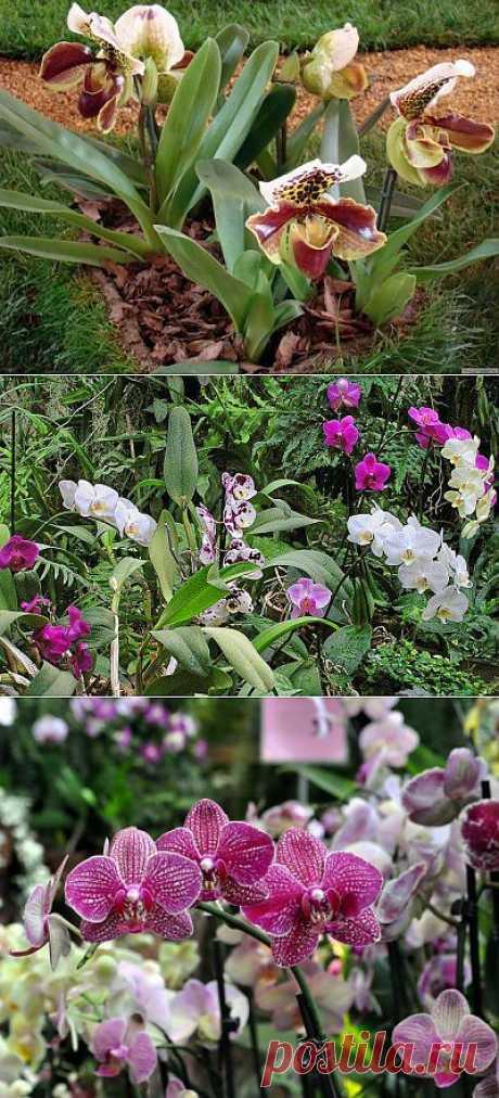 Почему не цветет орхидея. Начинающие цветоводы порой задаются серьезным вопросом: «Почему не цветет орхидея?». Одно дело, когда растение приобрели цветущим, и совершенно другое — научиться создавать все условия для повторного цветения вновь и вновь.