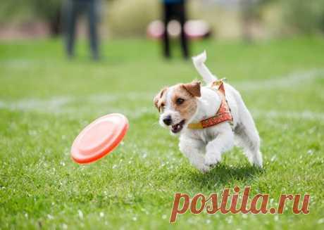 Как помочь собаке прожить более долгую и счастливую жизнь | PetTips