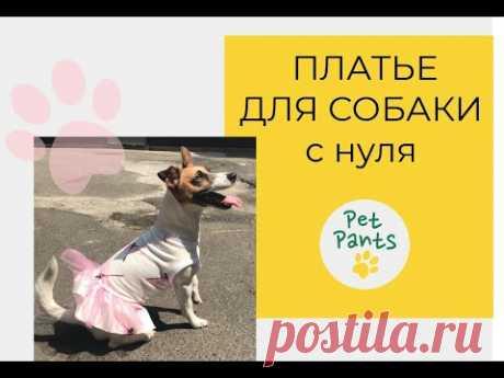 Платье для собаки. Строим лекало и шьем.