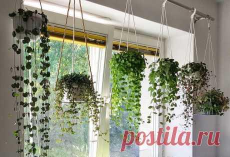 Висячие сады | Сама себе агроном | Яндекс Дзен