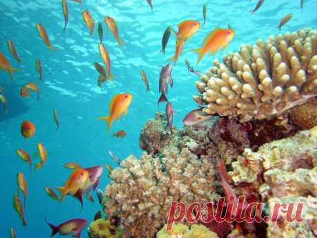 Новые фотографии красоты подводного мира.