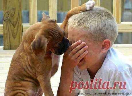 Безграничное терпение и любовь животных к детям