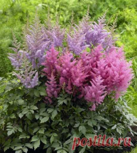 Лучшие многолетники, цветущие все лето - 10 примеров цветов с фото, названиями и описанием