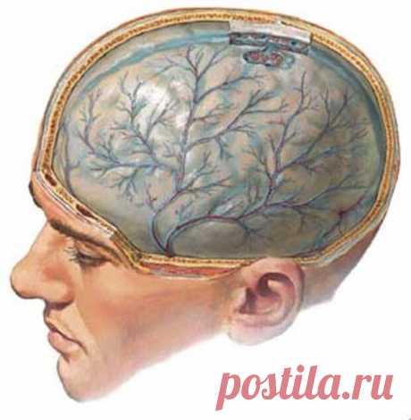 Рецепты для очистки сосудов головного мозга.