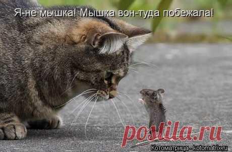 Мышек я люблю! | KotoMail.ru