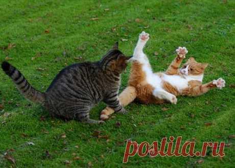 Cat's dismantling \/ Pets