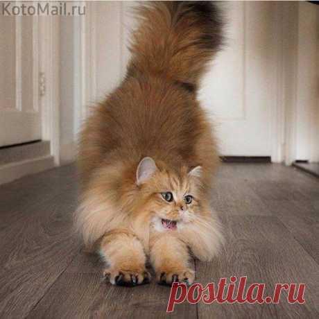 Привет! А я не сплю   KotoMail.ru